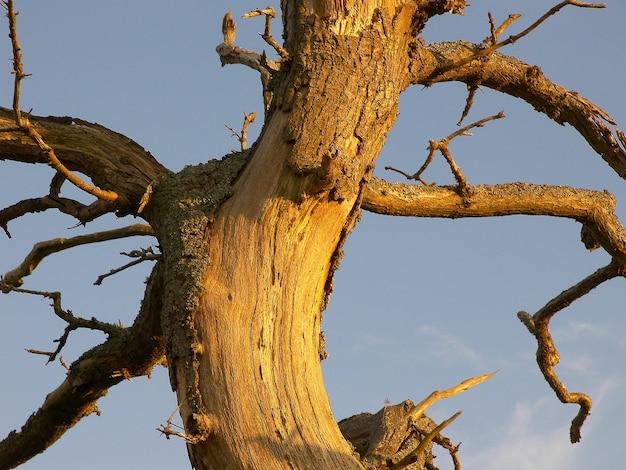 Close vertical de um tronco de árvore danificado com galhos nus