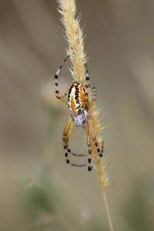 Close vertical de uma aranha em uma planta