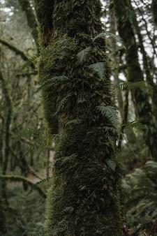 Close vertical de uma árvore coberta de folhas e musgos em uma floresta
