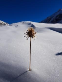 Close vertical de uma flor amarela com espinhos afiados em uma paisagem de neve