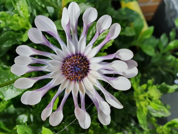 Close vertical de uma flor exótica