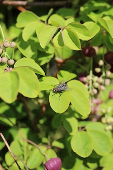 Close vertical de uma mosca em folhas verdes