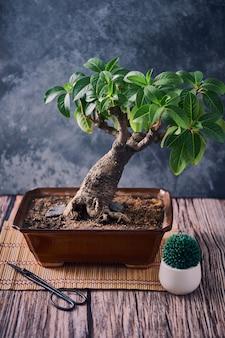 Close vertical de uma pequena planta exótica crescendo em um vaso