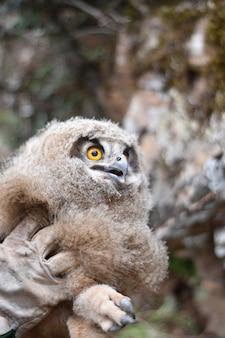 Close vertical de uma pessoa segurando uma coruja durante o dia