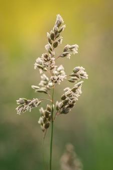 Close vertical de uma planta de grama em uma natureza borrada
