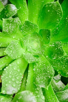 Close vertical de uma planta verde coberta com gotas de orvalho