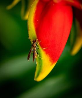 Close vertical de uma polistes dorsalis em uma folha de flor sob a luz do sol