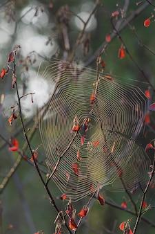 Close vertical de uma teia de aranha em um galho de árvore com um fundo desfocado