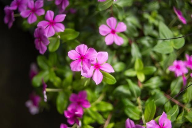 Closeup a flor