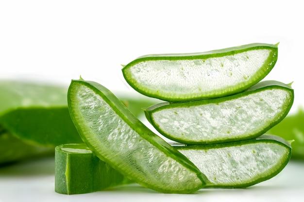 Closeup aloe vera ou cacto estrela em um fundo branco ervas comumente usadas para tratar a pele