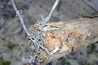 Closeup arame farpado, espinhos afiados e