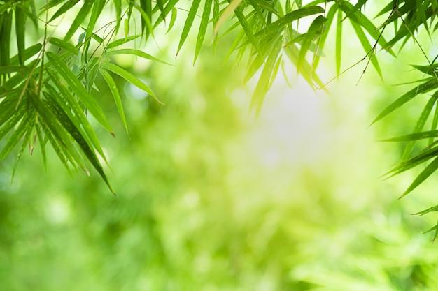 Closeup bela vista da folha de bambu verde natureza em vegetação turva fundo com luz solar e cópia espaço