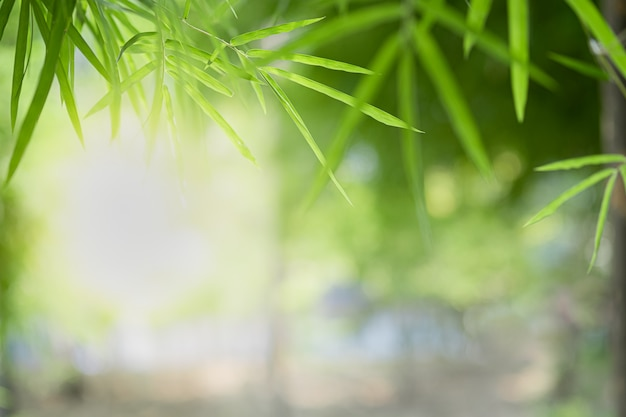 Closeup bela vista da folha de bambu verde natureza nas hortaliças turva fundo com luz solar e copyspace