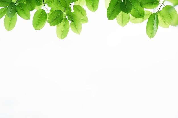 Closeup bela vista da folha verde natureza na vegetação turva fundo com luz solar e espaço de cópia. é usado para fundo de verão de ecologia natural e conceito de papel de parede fresco.