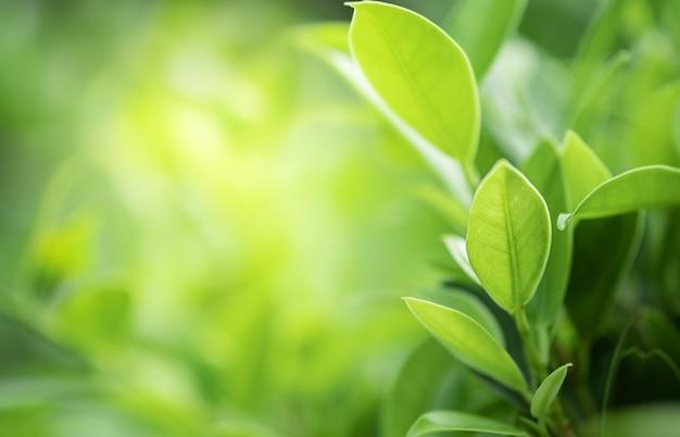 Closeup bela vista da folha verde natureza na vegetação turva fundo com luz solar