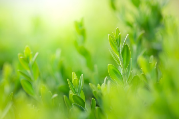Closeup bela vista da folha verde natureza na vegetação turva