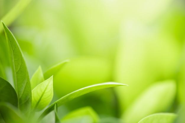 Closeup bela vista da folha verde natureza