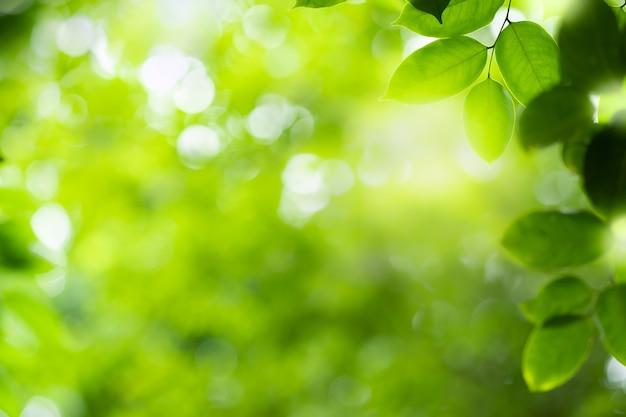 Closeup bela vista das folhas verdes da natureza em fundo de árvore verde turva com luz do sol no parque do jardim público. é ecologia de paisagem e espaço de cópia para papel de parede e pano de fundo.