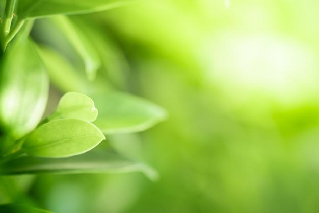 Closeup bela vista das folhas verdes da natureza em fundo de árvore verde turva com luz do sol no parque do jardim público.