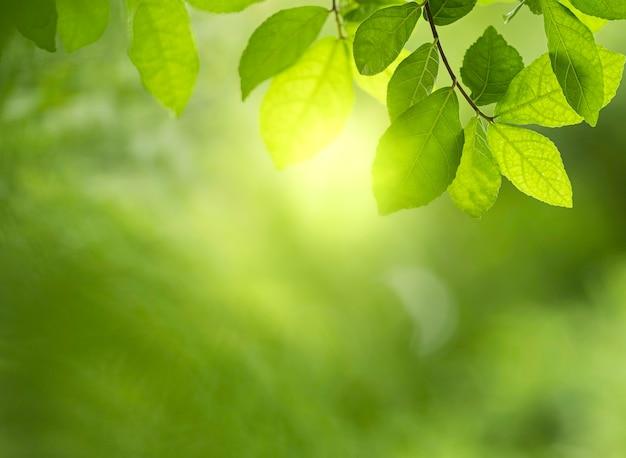 Closeup bela vista das folhas verdes da natureza em fundo de árvore verde turva.