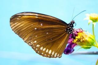 Closeup borboleta