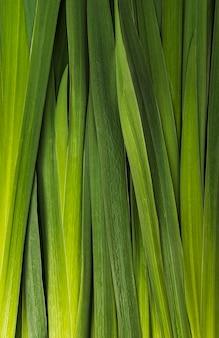 Closeup bunch ov folhas verdes