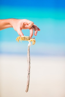 Closeup caranguejo ao vivo na praia branca
