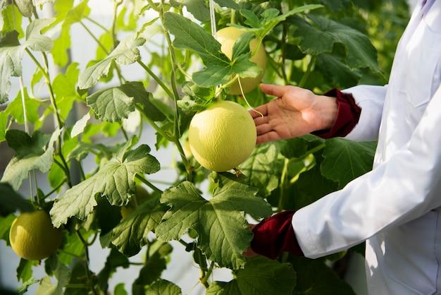 Closeup, cientista, estudar, planta, frutas