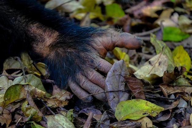 Closeup da mão de um macaco no chão rodeado de folhas verdes e amarelas