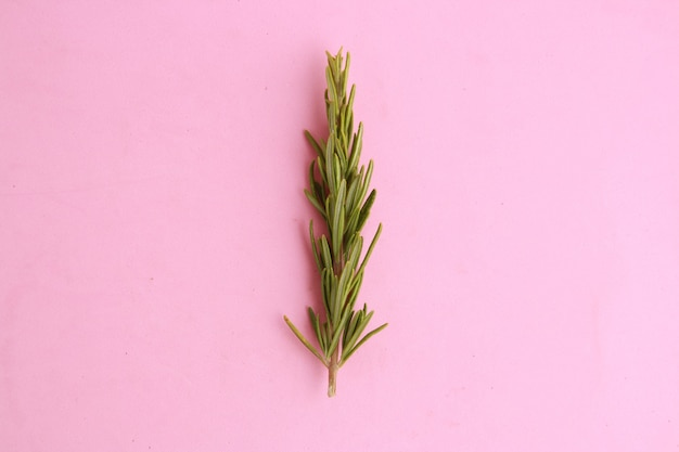 Closeup de alecrim em uma superfície cor de rosa