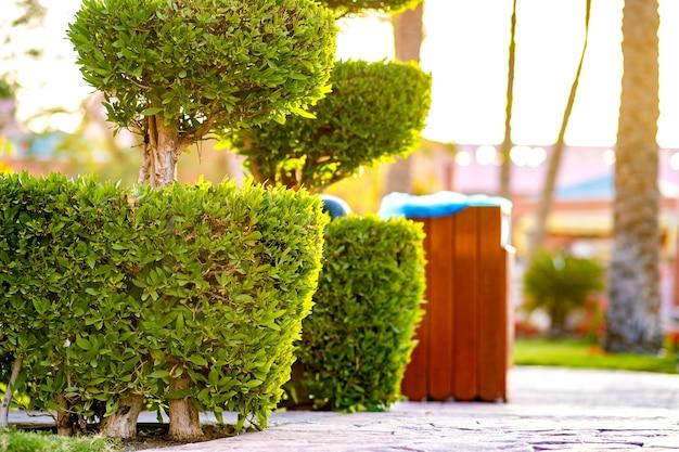 Closeup de arbusto verde fresco com tronco de madeira e folhas verdes vibrantes, crescendo no jardim de verão.