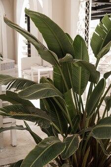 Closeup de belas folhas de palmeira tropical verde exuberante.