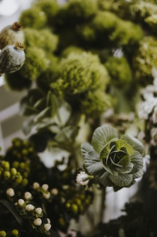 Closeup, de, bola verde, dianthus