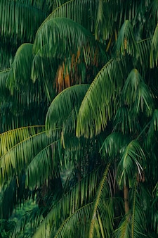 Closeup, de, bonito, palma, árvores, fundo