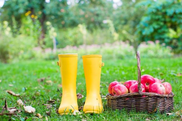 Closeup de botas de borracha amarelas e cesta com maçãs vermelhas no jardim