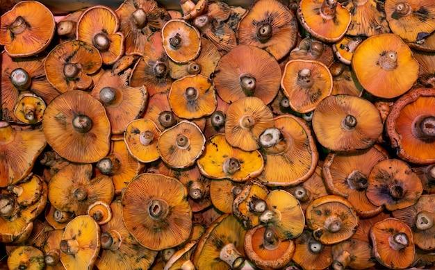Closeup de cogumelos à venda no mercado