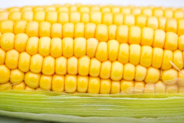 Closeup de espiga de milho amarelo sobre fundo branco, tiro macro
