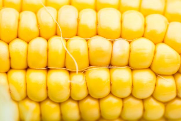 Closeup de espiga de milho amarelo, tiro macro