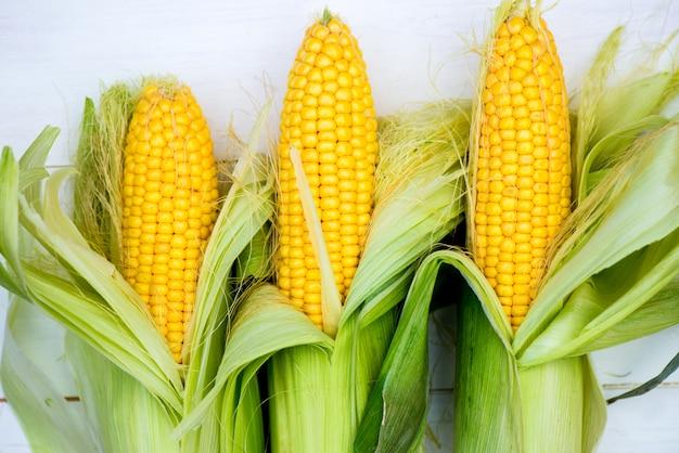 Closeup de espigas de milho amarelo sobre fundo branco, vista superior, macro