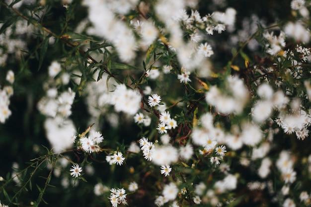 Closeup, de, flor branca cortador