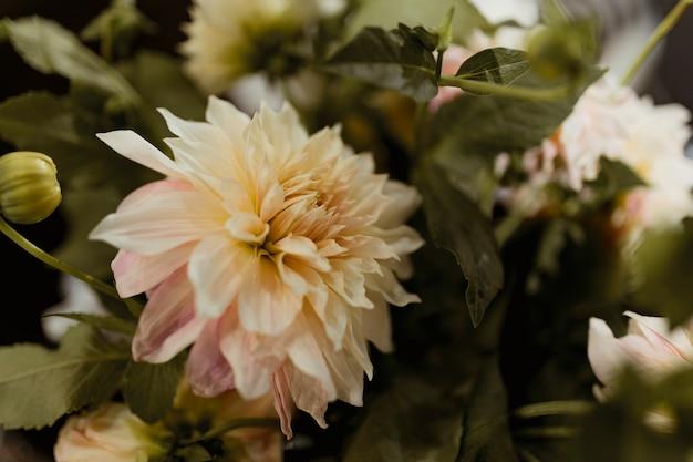 Closeup de flor branca e rosa