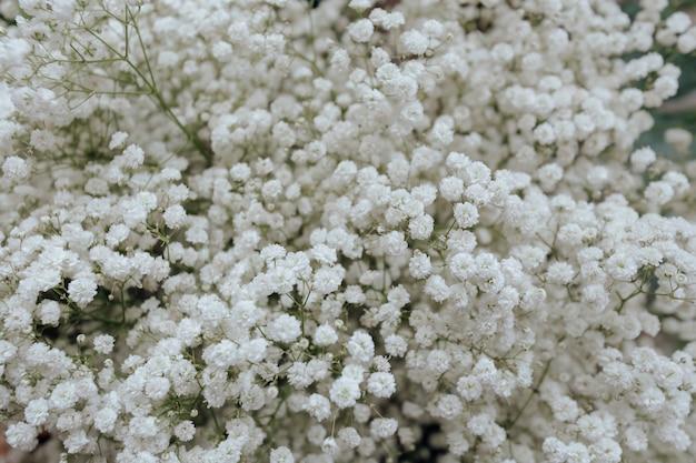 Closeup, de, flor branca, papel parede