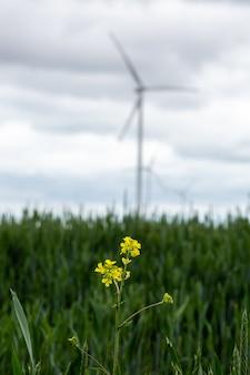 Closeup de flores amarelas selvagens em um campo com moinhos de vento brancos no embaçado