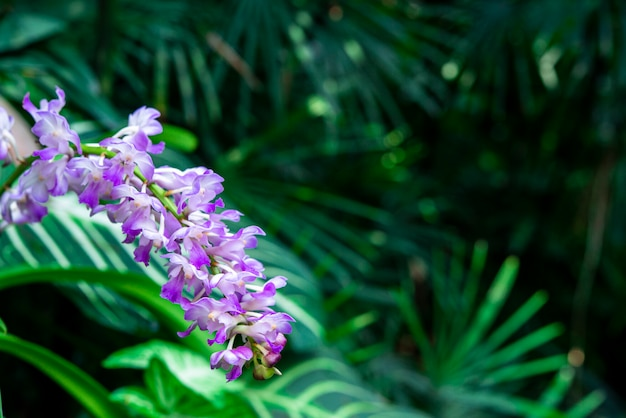 Closeup de flores de orquídeas e fundo de folhas verdes no jardim.