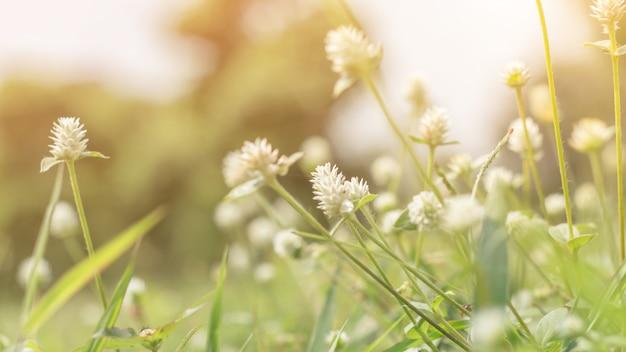 Closeup, de, folha verde, em, jardim