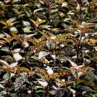 Closeup de folhas tropicais detalhadas