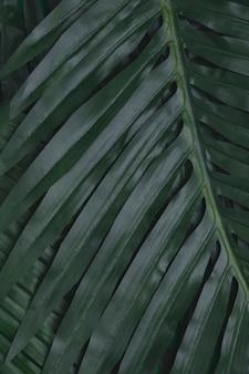 Closeup de folhas tropicais