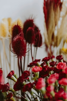 Closeup, de, fresco, flores vermelhas