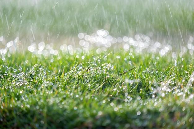 Closeup de gotas de chuva caindo na grama verde no verão.