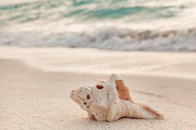 Closeup de grande concha na praia ao nascer do sol, férias